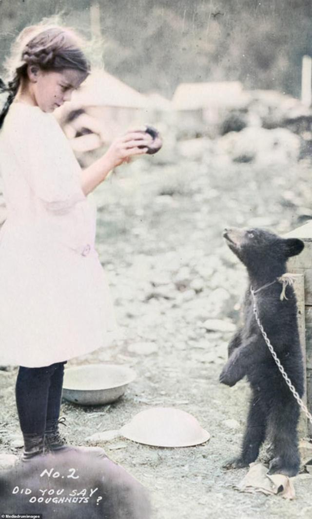 A young girl feeds a doughnut to her pet black bear. The caption on the photograph reads, 'Did you say doughnuts?' Today there are roughly 130,000 bears living in Alaska, with the black bear being by far the most common.The massive brown bears found on Kodiak Island are the world's largest carnivores that grow up to 1,500 pounds