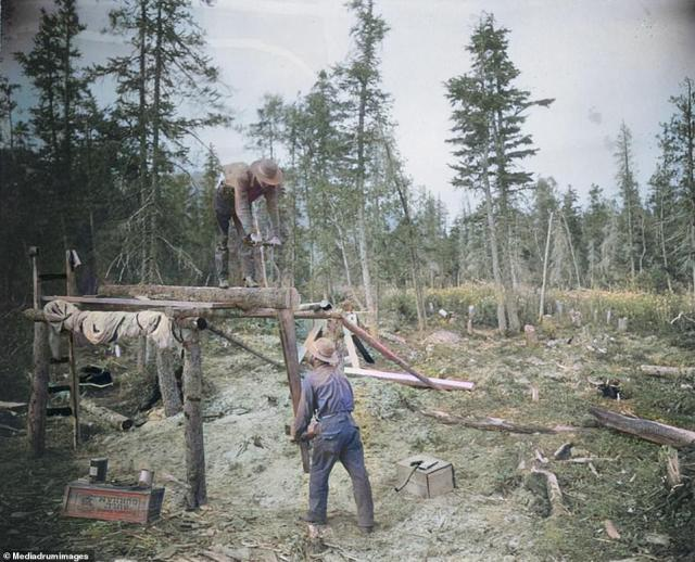 Lumberjack's fell a section of forest in 1900. Today Alaska has 22 million acres of national forest as well as 14 distinct mountain ranges, more than 3 million lakes, 100,000 glaciers and a longer coastline than all of the other US states combined