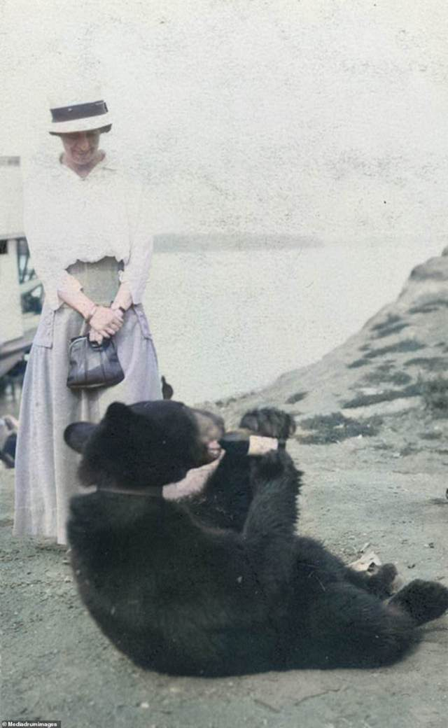 A woman watches in delight as her pet bear guzzles down a bottle of wine.The United States purchased Alaska for $7.2million in 1867 (roughly $120million in today's money). Critics of the transaction believed that the land had nothing to offer and it remained ungoverned for 30 years until gold was discovered in the 1890s