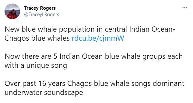 Blue whales have structured, simple songs, unlike humpbacks whales