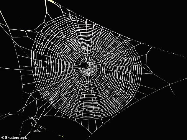 Researchers created the film by mimicking the properties of spider silk, one of the strongest materials in nature