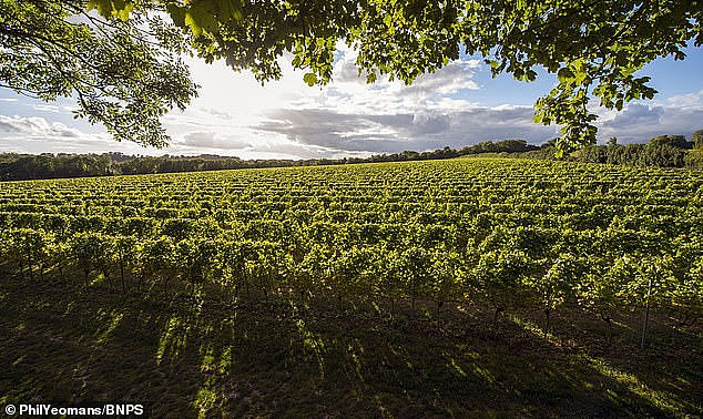 The Langham Estate near Dorchester.Langham was named by the International Wine & Spirit Competition as Sparkling Wine Producer of the Year 2020