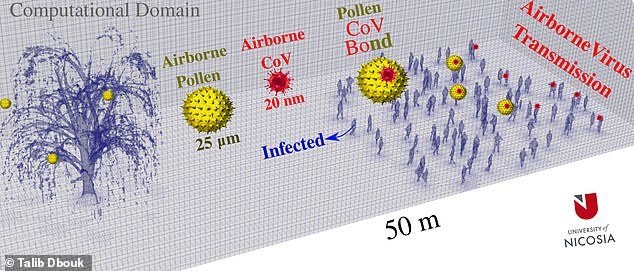 Experts from the University of Nicosia, Cyprus, created a computer simulation of a willow tree — a prototypical pollen emitter — and modelled how its grains spread. In a light breeze, the model showed that pollen could pass through a crowd 66 feet away within just one minute, potentially helping move viral particles along the way