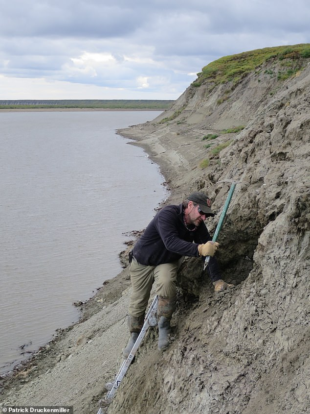 The finds add to evidence that dinosaurs were warm-blooded and dispels the notion that Arctic species would have migrated to lower, warmer latitudes to lay eggs. Pictured: biologist Greg Erickson conducts excavations of material along the banks of theColville River