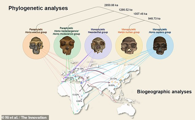 'It is widely believed that the Neanderthal belongs to an extinct lineage that is the closest relative of our own species,' said Professor Ni. 'However, our discovery suggests that the new lineage we identified that includes Homo longi is the actual sister group of H. sapiens'