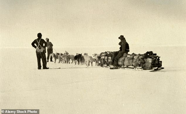 Spratt's cakes were given to dogs on a range of famous expeditions, including Sir Ernest Shackleton's Nimrod (1907-1909) and Endurance (1914-1917) expeditions