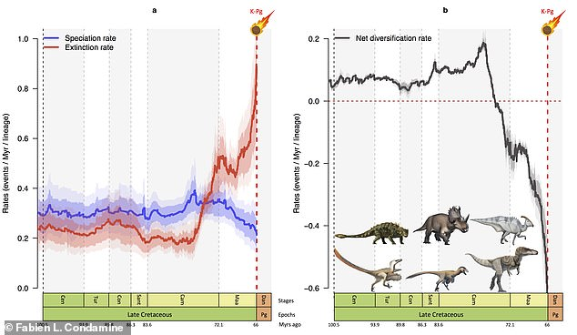Analysis: These graphs show how speciation rate (blue) dipped and extinction rate (red) rose sharply in the last 10 million years of the age of dinosaurs. Run together, this corresponds to a rapid reduction in the number of species (black) just before an asteroid hit 66 million years ago