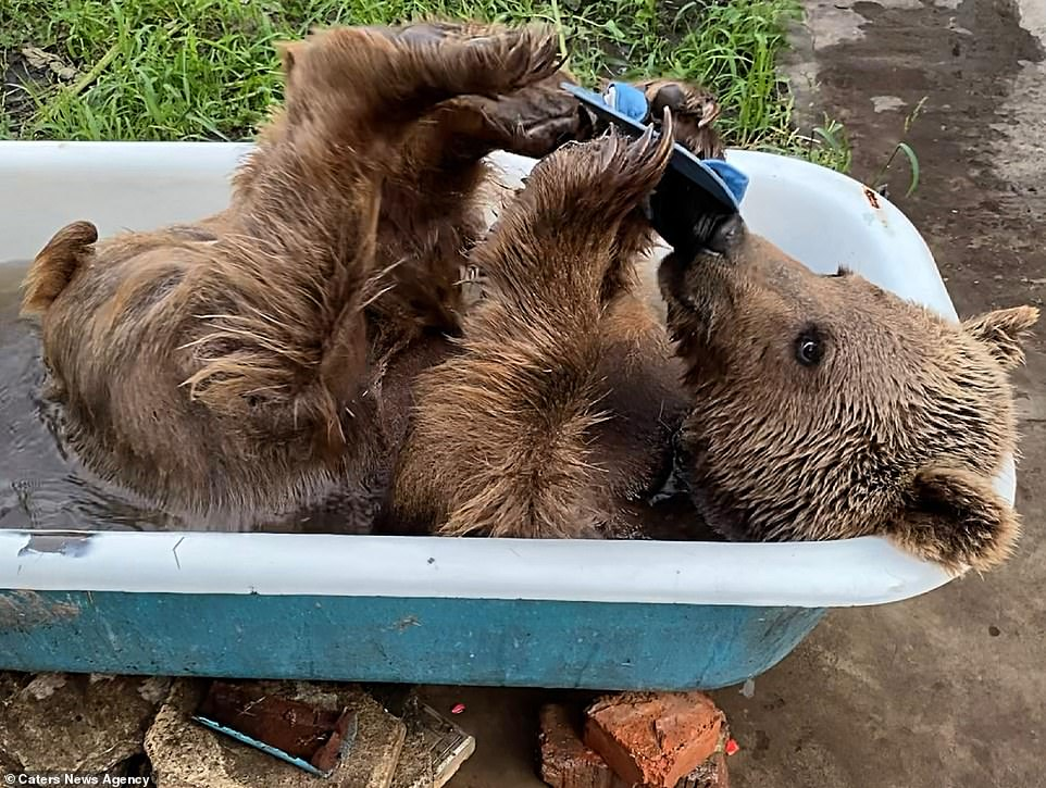 Playtime in the bath is a regular occurrence for Balu who climbs in himself whenever he sees the bath full