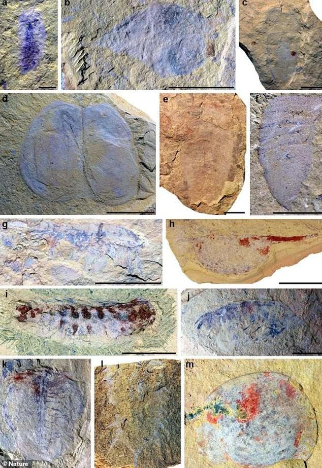 The researchers have identified 118 species, including precursors to modern-day insects, worms, crustaceans, jellyfish, sponges and trilobites. Some 17 of the species are previously unknown to science