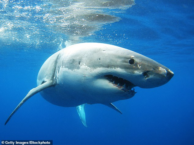 96 percent of 109 shark films listed on online database iMDB portray interactions between humans and the apex predators as 'overtly' threatening