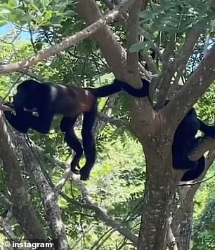 Wildlife: Earlier this week, she shared a video of herself spotting a family of monkeys in a nearby tree