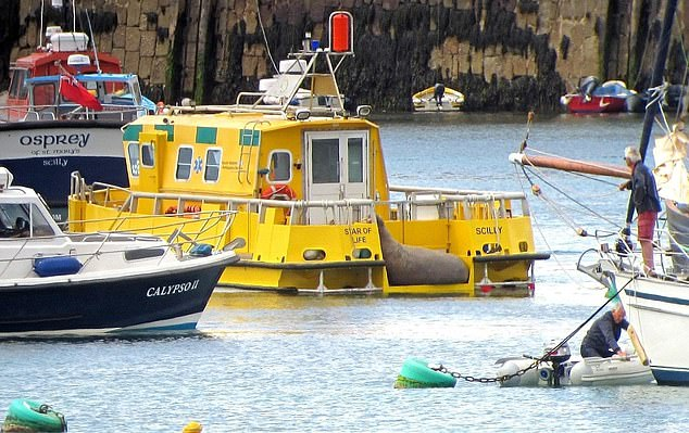 Organisations involved in trying to help Wally include British Divers Marine Life Rescue, the Isles of Scilly Wildlife Trust, the Cornwall Seal Group Research Trust and the St Mary's Harbour Team