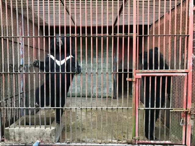 Shocking images show the horrendous conditions of defunct bear bile farms in South Korea