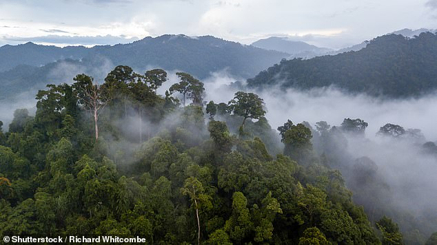 Through the extensive observations, they found southeastern Amazonia - about 20 per cent of the whole area - switched to being a substantial source of CO2