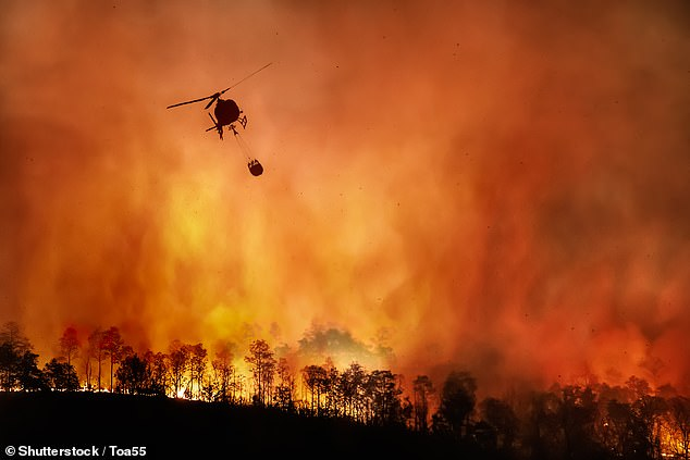 This shift is is further fuelling the global warming crisis, which is leading to increasing 'extreme weather events,' including forest fires, and the team say 'each year it's getting worse'
