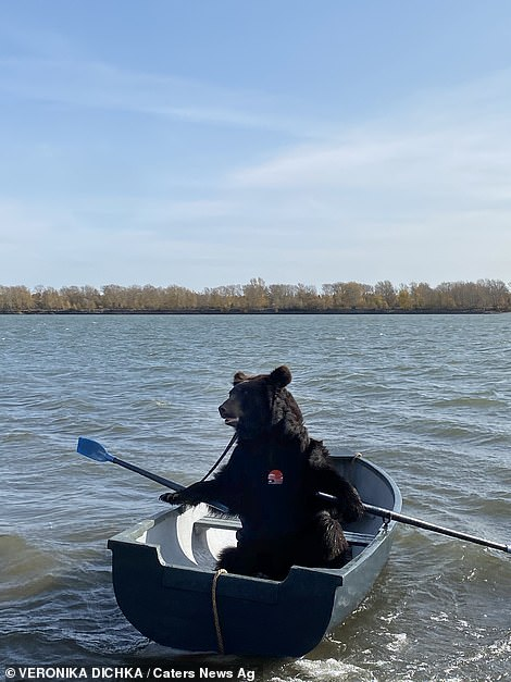 Pictured: Archie the brown bear in a row boat