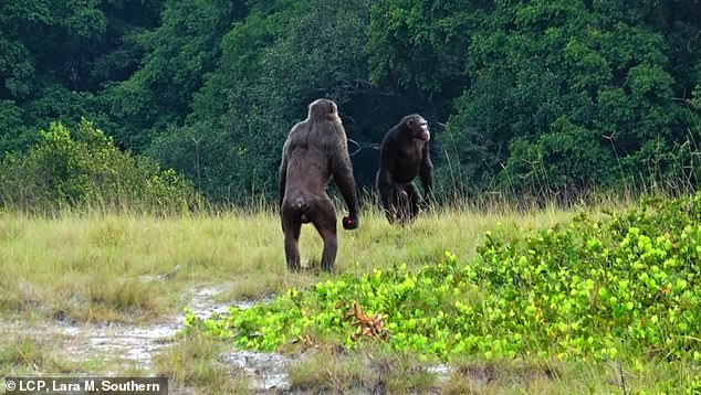 A team of scientists from Osnabrück University and the Max Planck Institute suggest two lethal attackers are a result of the animals competing for food that is diminishing because of climate change