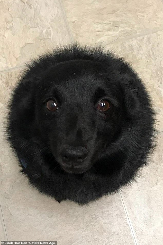 A cute little dog has won people's hearts after he went viral for looking like a black hole