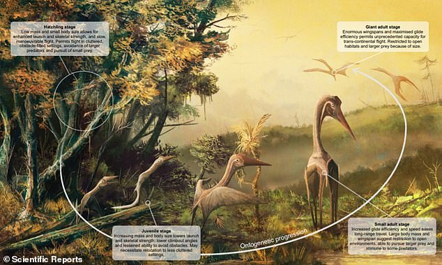 Visual summary of how basic size-dependent fighting parameters (wing load, wingspan and aspect ratio) may have influenced pterosaur flight throughout their lives