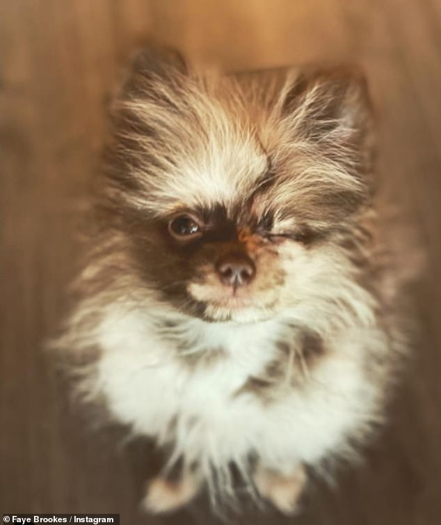 Sweet: Faye and her boyfriend Joe Davies got their Pomeranian puppies last year and have shared a slew of snaps of the puppies on Instagram