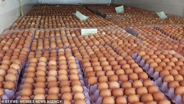 Now the Environment Ministry is investigating new egg scanning technology that will prevent newborns from being killed by detecting the sex of an unhatched chick (pictured)
