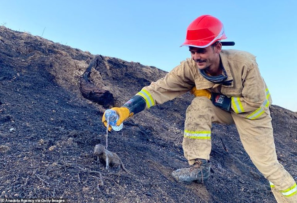 Forest workers rescued two weasel cubs trapped in the flames of a forest fire in Manavgat district, southern Turkey on Wednesday