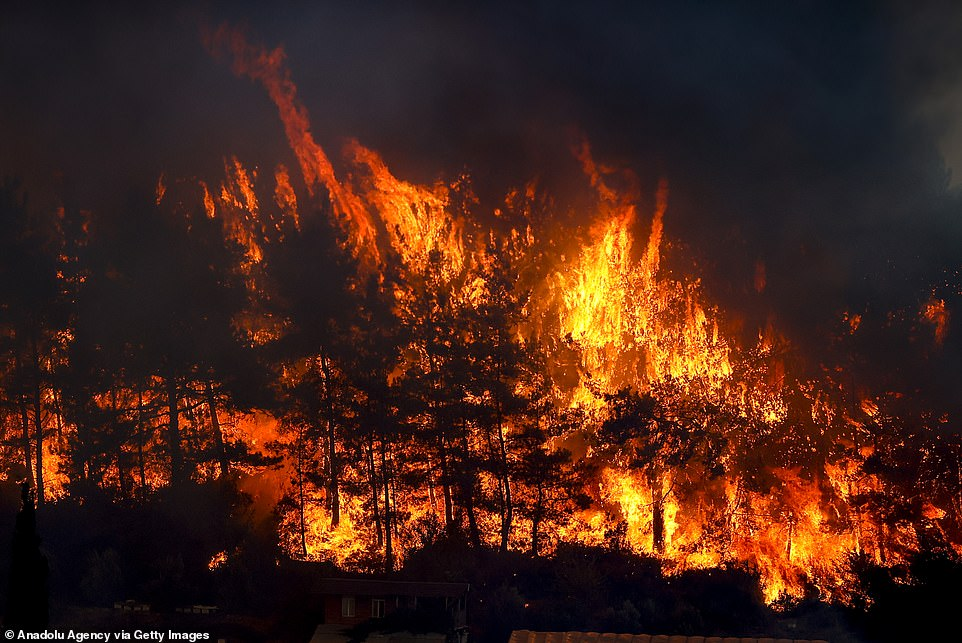 The forest fire has continued burning for a second day today, helped by hot weather and strong winds that have fanned the flames