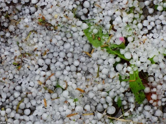 Scientists fear the rate of global warming is spiralling out of control, saying that 'climate change is happening and it's happening now' (hail stones in Northampton earlier this week, pictured above)
