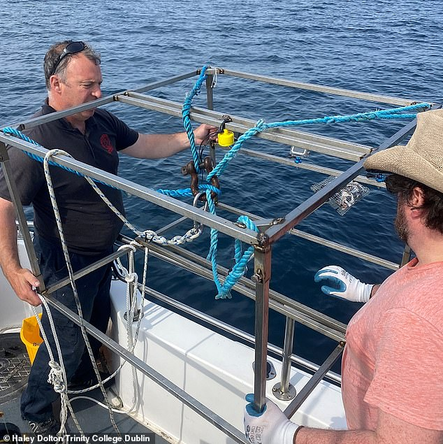 Pictured is Luke Aston, a local fisherman (left), and Patrick Collins, an ecologist at Queen's University Belfast, deploying the video camera and bait bag