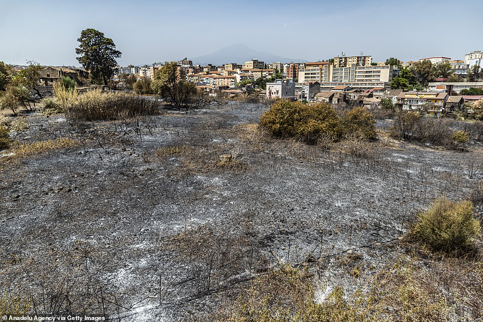 Areas of grassland on the outskirts of the city of Catania, Sicily, are pictured after being destroyed by wildfires