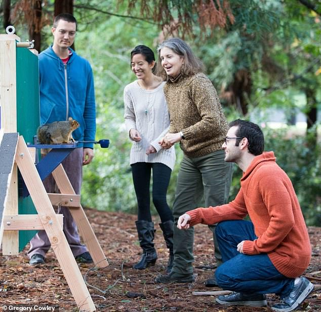 Fox squirrel, apparatus, and experimenters on the UC Berkeley campus - from left to right, Nate Hunt, Judy Jinn, Lucia Jacobs and Aaron Teixeira