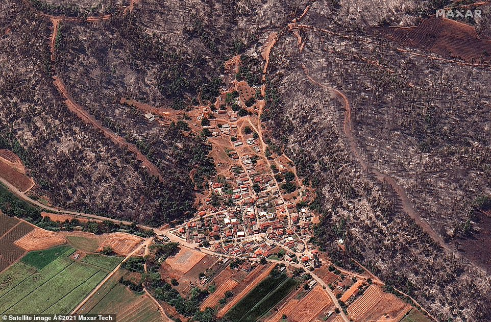 A satellite image shows how woodland was torched around one Greek village which firefighters managed to save, though elsewhere on Evia more than 1,000 homes have been destroyed