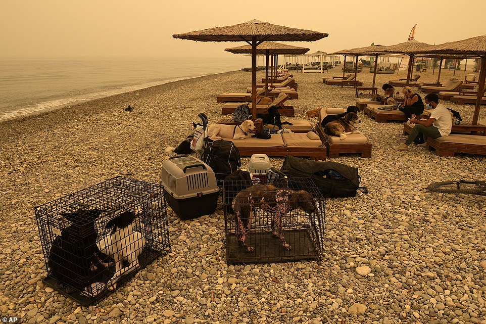 Residents ofPefki village gather on the nearby beach with their pets as they try to flee the island of Evia, with flames closing in and threatening to destroy their livelihoods