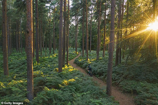 Forests in midlatitude regions like the United States and Eurasia have a net beneficial impact on combatting global warming, according to a new report from Princeton University, thanks to their ability to attract clouds that can reflect sunlight back into space