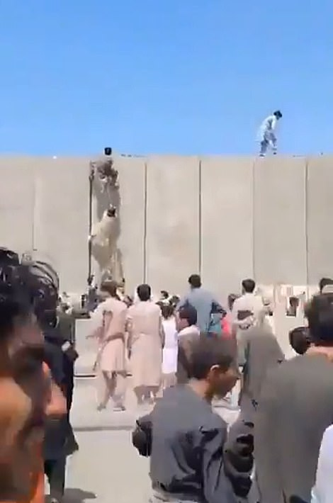 Hundreds of desperate Afghans scaled the walls of Kabul airport