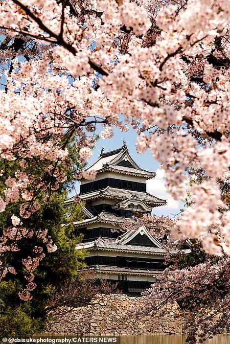 This stunning image of Matsumoto Castle in Nagano Prefecture, Japan, was taken by Daisuke Uematsu