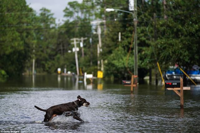 A dog plays fetch in a flooded neighborhood in Kiln, Mississippi on Monday