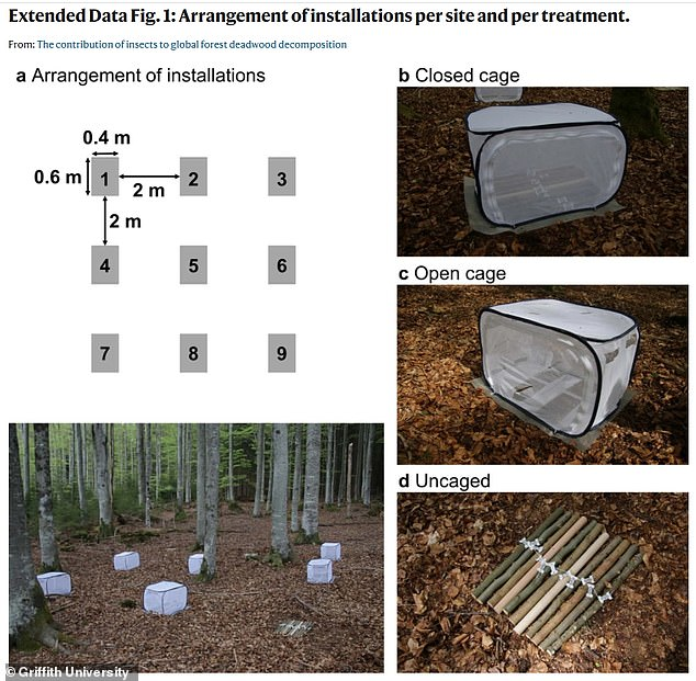The researchers put half of the deadwood in mesh cages to keep out the insects to determine the level of decay they add and found that it was 'highly dependent on the climate, and will increase as temperatures rise'