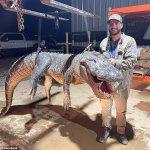 First-time alligator hunter wrangles 13ft-long 787-pounder after four hour battle in Mississippi 💥👩💥