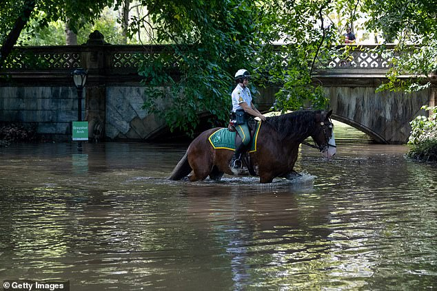 Meanwhile in New York, a City Parks Security Service officer on horseback surveyed the damage at Central Park, which recorded3.1 inches of rain per hour in the storm