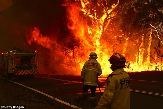 More than 60,000 koalas were impacted in the 2019-2020 bushfires which killed three billion native Australian animals