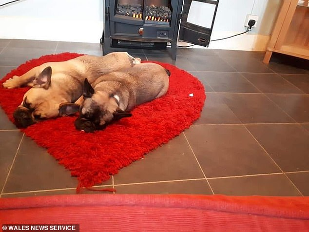 Owner Steph said she collapsed after being told her two dogs (pictured) had died