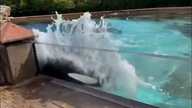 The heart-breaking footage was taken by anti-captivity activists at MarineLand, Niagara Falls earlier this month and shared on social media