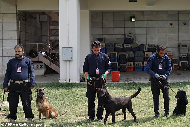 At least 30 dogs were found in the airport following the US withdrawal on August 30 - half of them in the area that was controlled by US forces with more were found in zones that belonged to former Afghan police