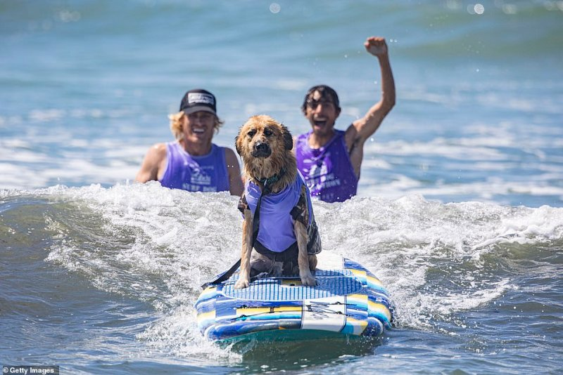 The funds raised from Surf Dog Surf-A-Thon registration and event spornshorhsip will be used towards helping theHelen Woodward Animal Center care for rescued dogs