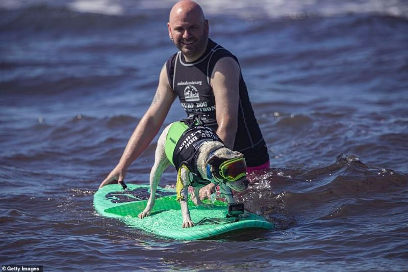 Dan Nykolayko assists surfing dog Faith were smong the event participants
