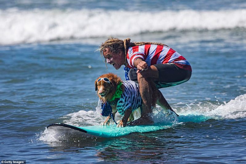 Michael Willis and his surfing partner Bridget compete at the 16th Annual Surf Dog Surf-A-Thon at Del Mar Dog Beach. Willis said:'We wanted to have as much fun as we could. It feels good to participate to help humans giving back. It felt like riding on top of the world'