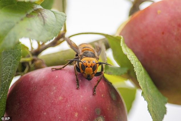 Invasive pests commonly found in China, Japan, Thailand, South Korea, Vietnam and other Asian countries