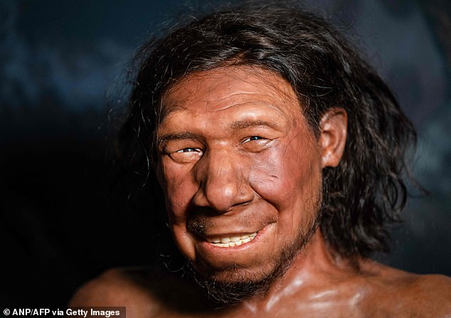 A reconstruction of the oldest Neanderthal krizan found in the Netherlands, on display at the National Antiquities Museum in Leiden