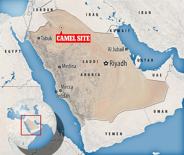 Research at the Camel site (pictured) is published in the Journal of Archaeological Science Reports